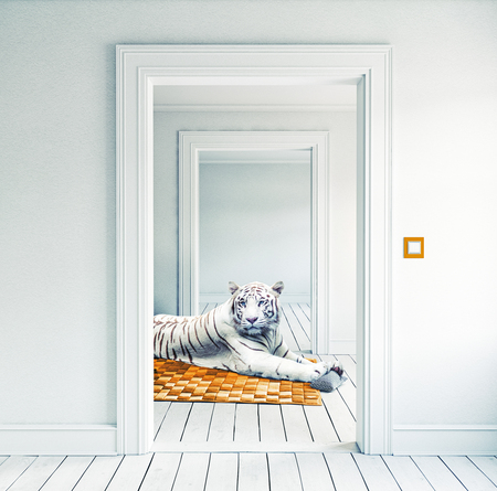 white tiger on the orange carpet in the room. Photocombination creative concept