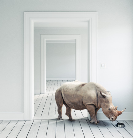 Rhino in the room as a pet. CG and photo combination Banque d'images - 101766230