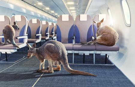 kangaroo in the airplane cabin interior. Photo combinated concept Zdjęcie Seryjne