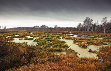Russian autumn swamp landscape