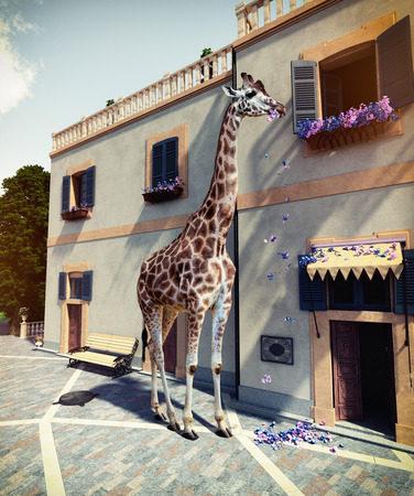 Giraffe eats flowers from house second floor. Media mixed concept.