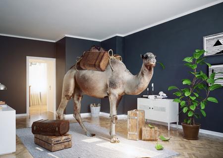 The camel in the room. Standard-Bild - 118173498