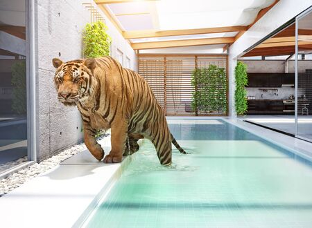 tiger in swimming pool (Photo & 3d illustration mixed)