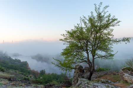 Green tree over misty canyon, river and stones Banco de Imagens