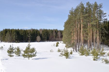 View of coniferous forest edge in winter time, Russia Stock Photo