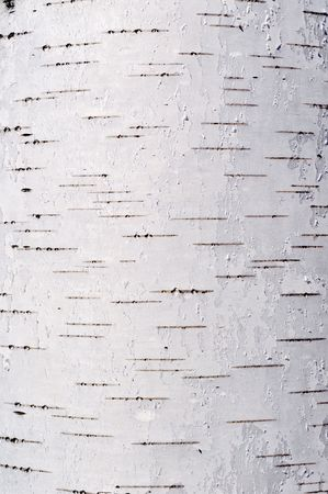 Close up of birch bark surface texture Stock Photo