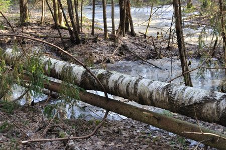 View of broken trees and frozen pool in early spring forest