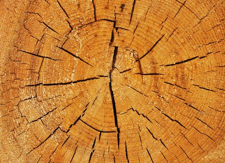 Cross section of big cracked tree trunk showing growth rings Stock Photo - 6900141