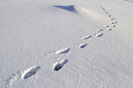 Human footprints in deep snow on sunny day photo