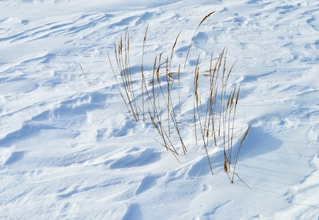 Close up of windy snow surface with dry grass photo