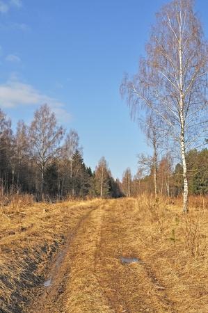 earth road: Strada di campagna terra attraverso la foresta in tempo di primavera, Russia
