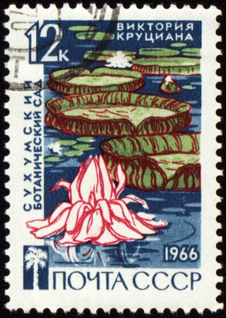 sukhumi: USSR - CIRCA 1966: stamp printed in USSR, shows Victoria waterlily in Sukhumi botanical garden, circa 1966