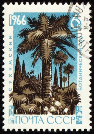 USSR - CIRCA 1966: stamp printed in USSR, shows palm trees in Sukhumi botanical garden, circa 1966