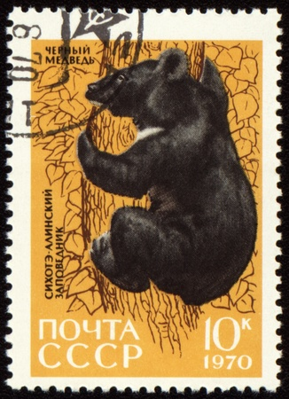 USSR - CIRCA 1970: post stamp printed in USSR shows Black bear on tree, series Animals from Sikhote-Alin Reserve, circa 1970 Stock Photo