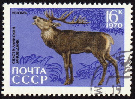 USSR - CIRCA 1970: post stamp printed in USSR shows Siberian stag, series Animals from Sikhote-Alin Reserve, circa 1970 photo