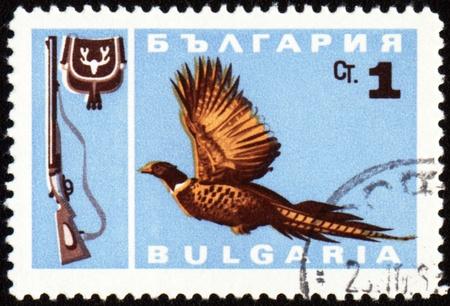 BULGARIA - CIRCA 1967: stamp printed in Bulgaria shows fowl bird, series, circa 1967 photo