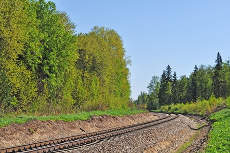 forest railroad: Curved railroad track in the forest