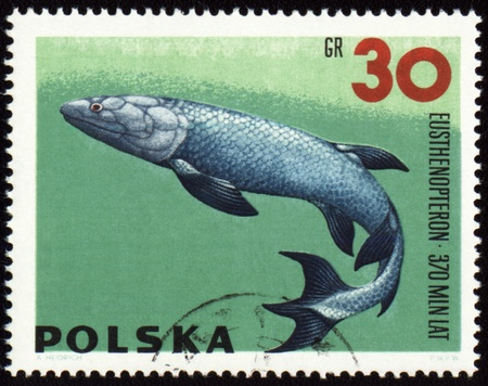 POLAND - CIRCA 1966: stamp printed in Poland shows a prehistoric fish Eusthenopteron, series Zoolith, circa 1966 photo