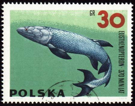 prehistoric fish: POLAND - CIRCA 1966: stamp printed in Poland shows a prehistoric fish Eusthenopteron, series Zoolith, circa 1966 Stock Photo