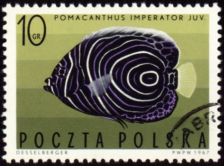 pomacanthus imperator: POLAND - CIRCA 1967: stamp printed in Poland shows Imperial angelfish (Pomacanthus imperator), series Exotic fish, circa 1967 Stock Photo