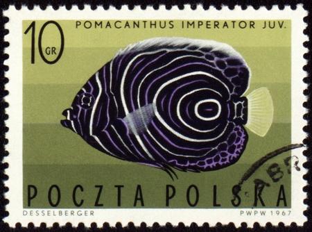 """pomacanthus imperator: POLONIA - CIRCA 1967: francobollo stampato in Polonia mostra pesci angelo Imperiale (Pomacanthus imperator), serie """"Pesci esotici"""", circa 1967 Archivio Fotografico"""