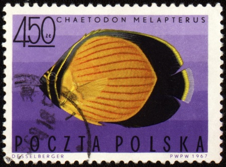 butterflyfish: POLAND - CIRCA 1967: post stamp printed in Poland shows Black-eye butterflyfish (Chaetodon melapterus), series Exotic fish, circa 1967 Stock Photo