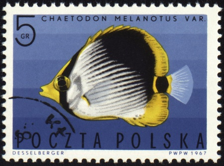 butterflyfish: POLAND - CIRCA 1967: stamp printed in Poland shows Striped Butterflyfish (Chaetodon melanotus), series Exotic fish, circa 1967