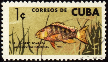 ichthyology: CUBA - CIRCA 1960s: stamp printed in Cuba shows fish, circa 1960s Stock Photo