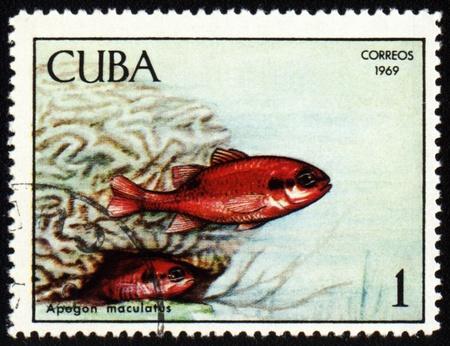 maculatus: CUBA - CIRCA 1969: stamp printed in Cuba shows fish Apogon maculatus, series Tropical fish, circa 1969