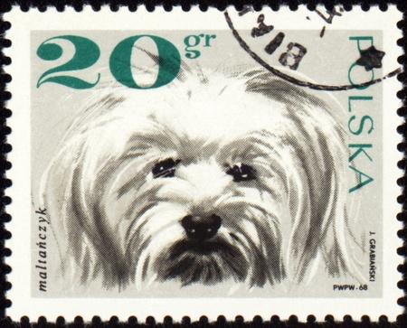 maltese dog: POLAND - CIRCA 1968: stamp printed in Poland shows Maltese dog, circa 1968