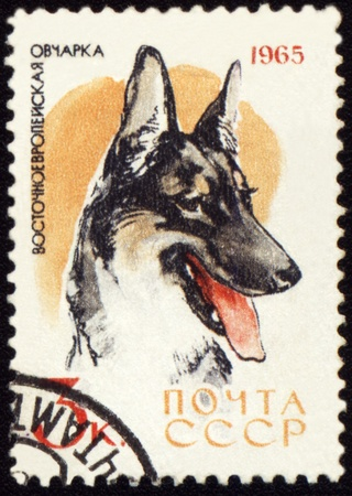 canceled: USSR - CIRCA 1965: stamp printed in USSR shows Alsatian dogs, series Dogs, circa 1965 Stock Photo