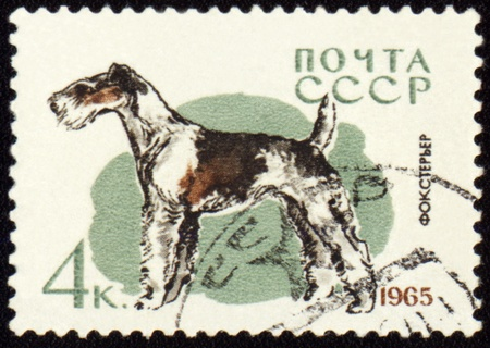 fox terrier: USSR - CIRCA 1965: stamp printed in USSR shows fox terrier, series Dogs, circa 1965 Stock Photo