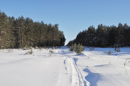 clearing the path: Snow-covered clearing in coniferous winter forest with ski track