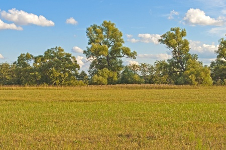 sloping: Sloping field on trees background, sunny autumn day