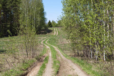 Country dirt road between trees on spring sunny day photo