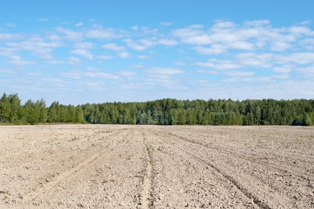 arable land: Arable land at forest background, sunny summer day