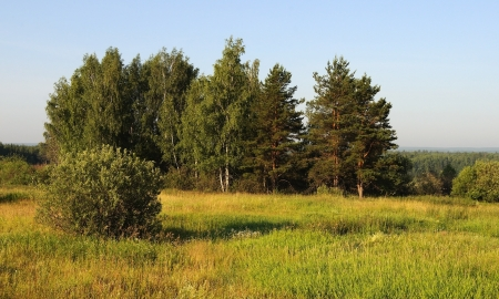 Group of trees at the forest edge