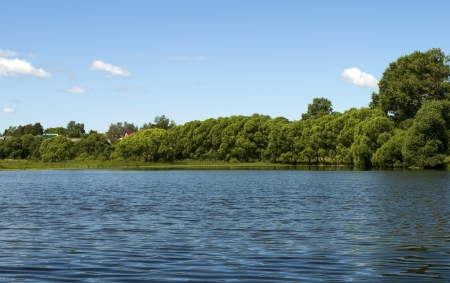 Thickets of trees on the lake shore Stock Photo