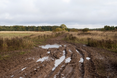 Country dirt road after rain Stock Photo - 16033061