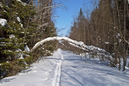 Clearing with ski track in winter forest Stock Photo - 16033063