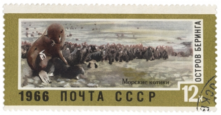 far east: USSR - CIRCA 1966  A post stamp printed in USSR shows fur seals on Bering Island, series  Landscapes of the Far East , circa 1966