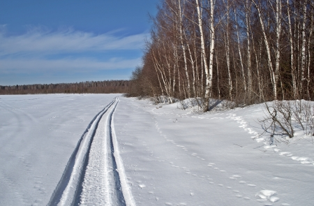 Snowmobile trail in the field along the woods, winter sunny day photo