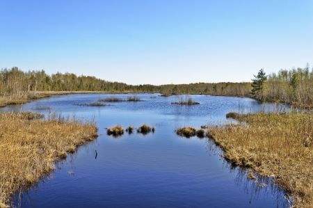 morass: Spring landscape with peat lake among morass