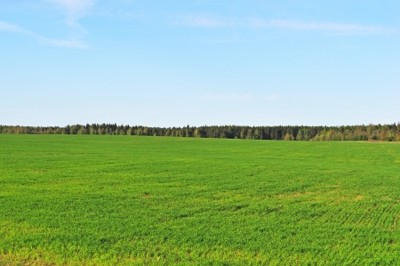 Green field on the forest background in spring time photo
