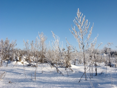 Dry grass with hoarfrost on blue sky background photo