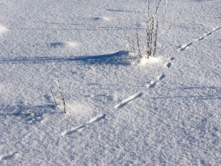 Snowy field with dry grass and animal traces photo