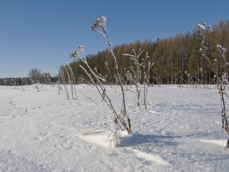 Field under snow, winter sunny day, Russia photo