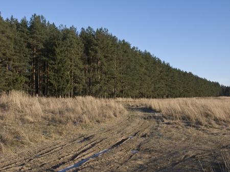 earth road: Bordo della foresta invernale con strada terra gelata, Russia