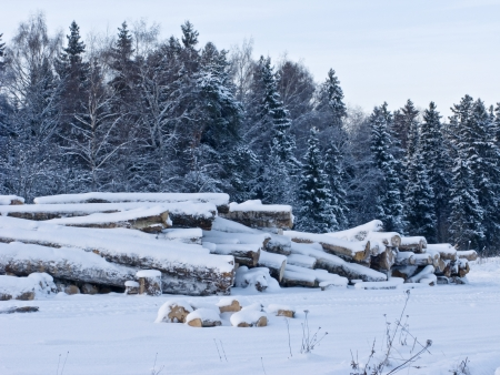 Stack of logs under snow in winter time