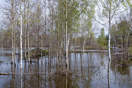 klyazma: Trees standing in water during a spring flood Stock Photo